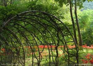 Daegu Arboretum, South Korea