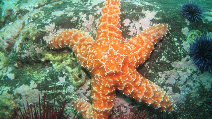 ochre-starfish_optimized