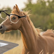 Neiiighhh! (Written by a Horse)