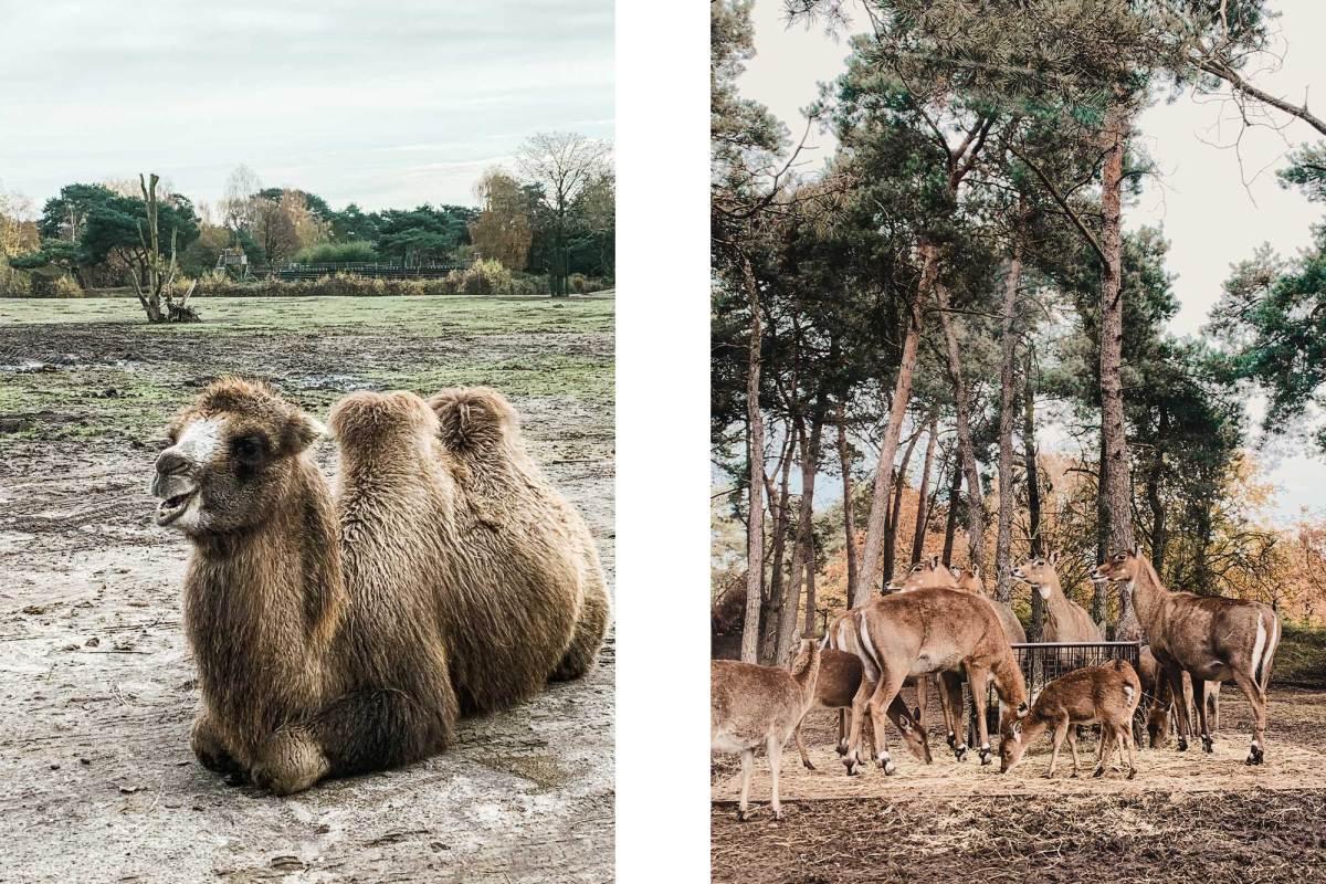Het safaripark de Beekse Bergen