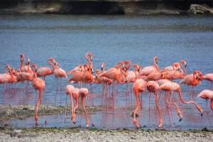 Vakantie tips Bonaire