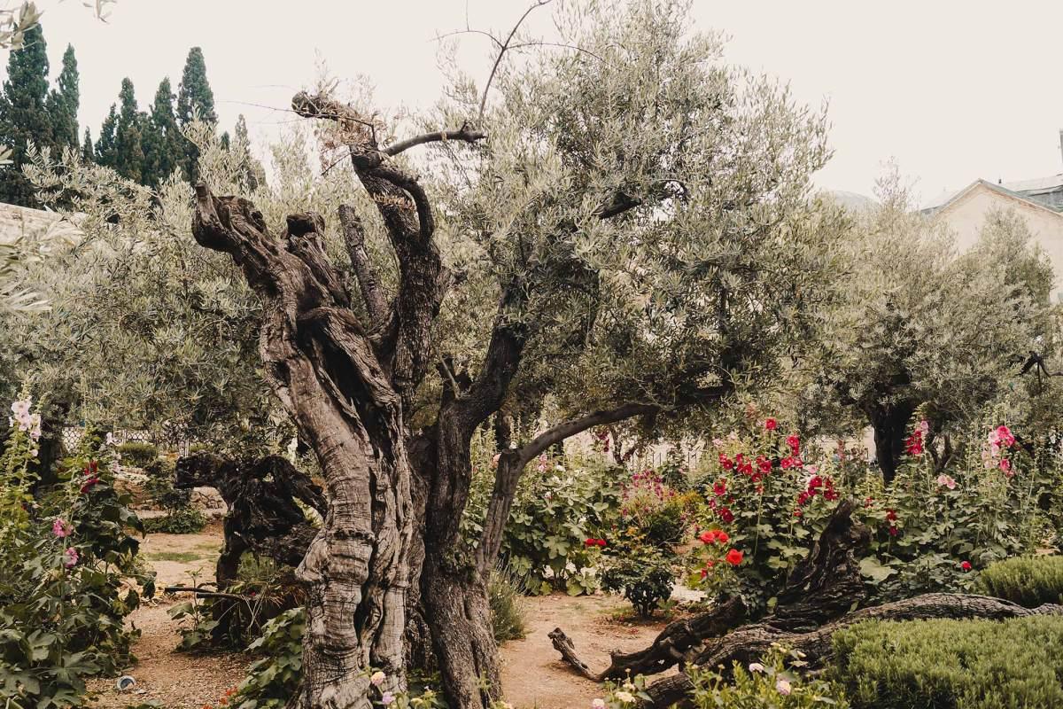 Getsemane bezoeken Jeruzalem