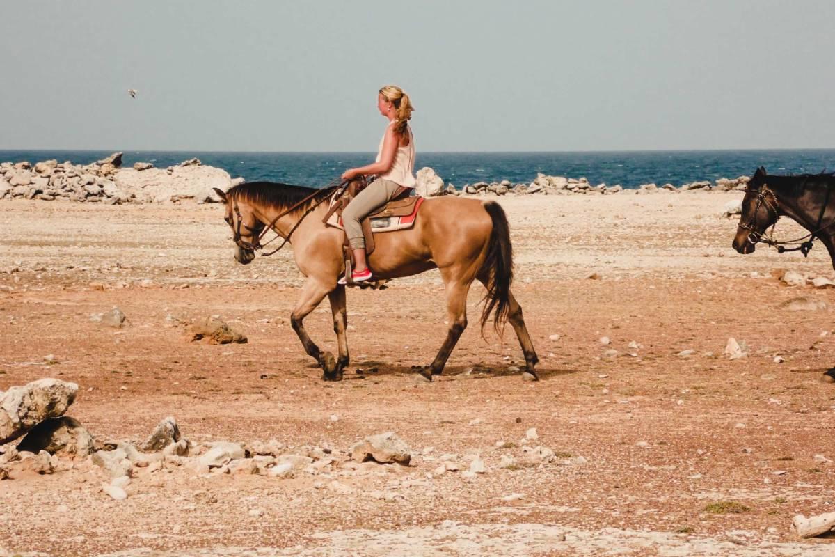 Donkey Sanctuary en zwemmen met paarden