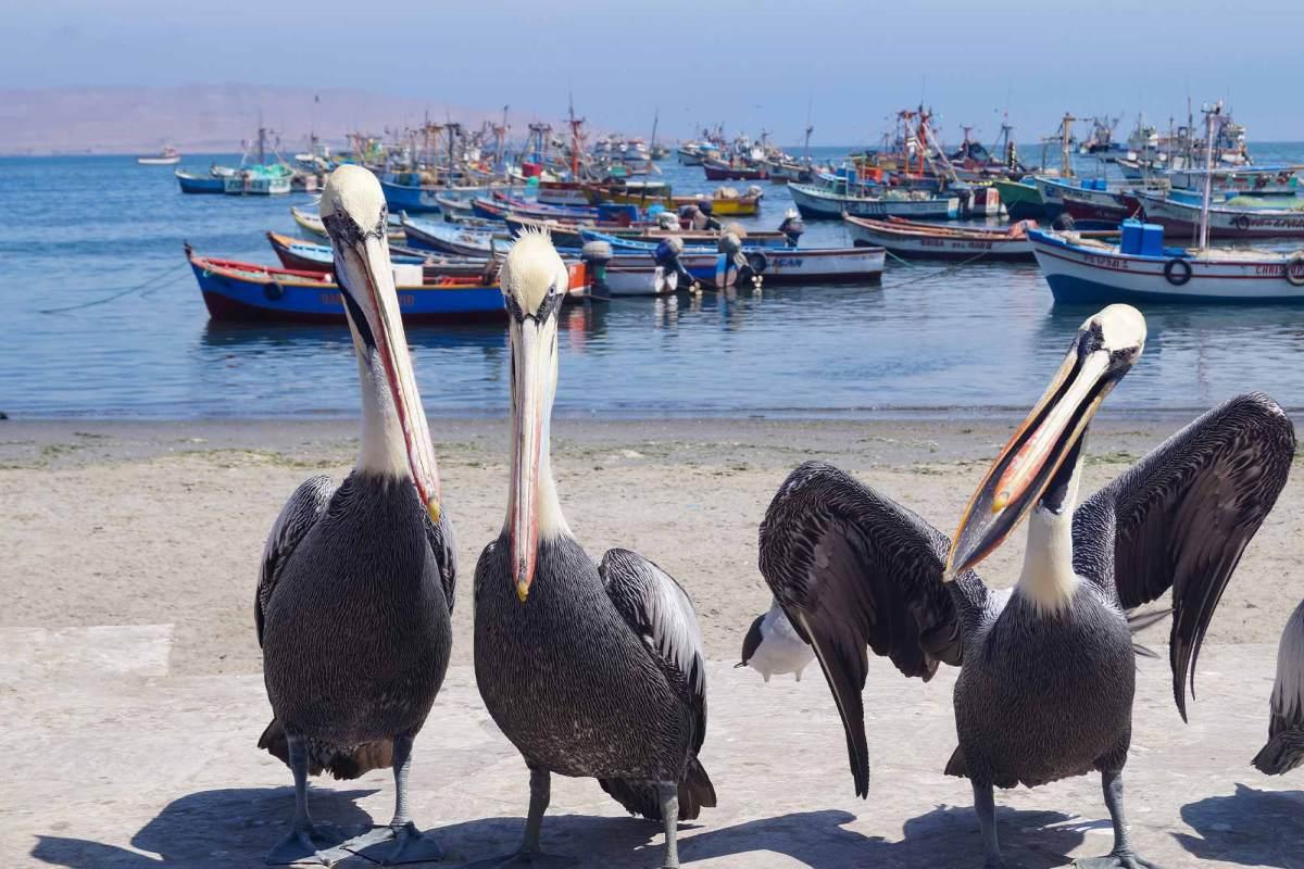 Zeehonden spotten in Paracas