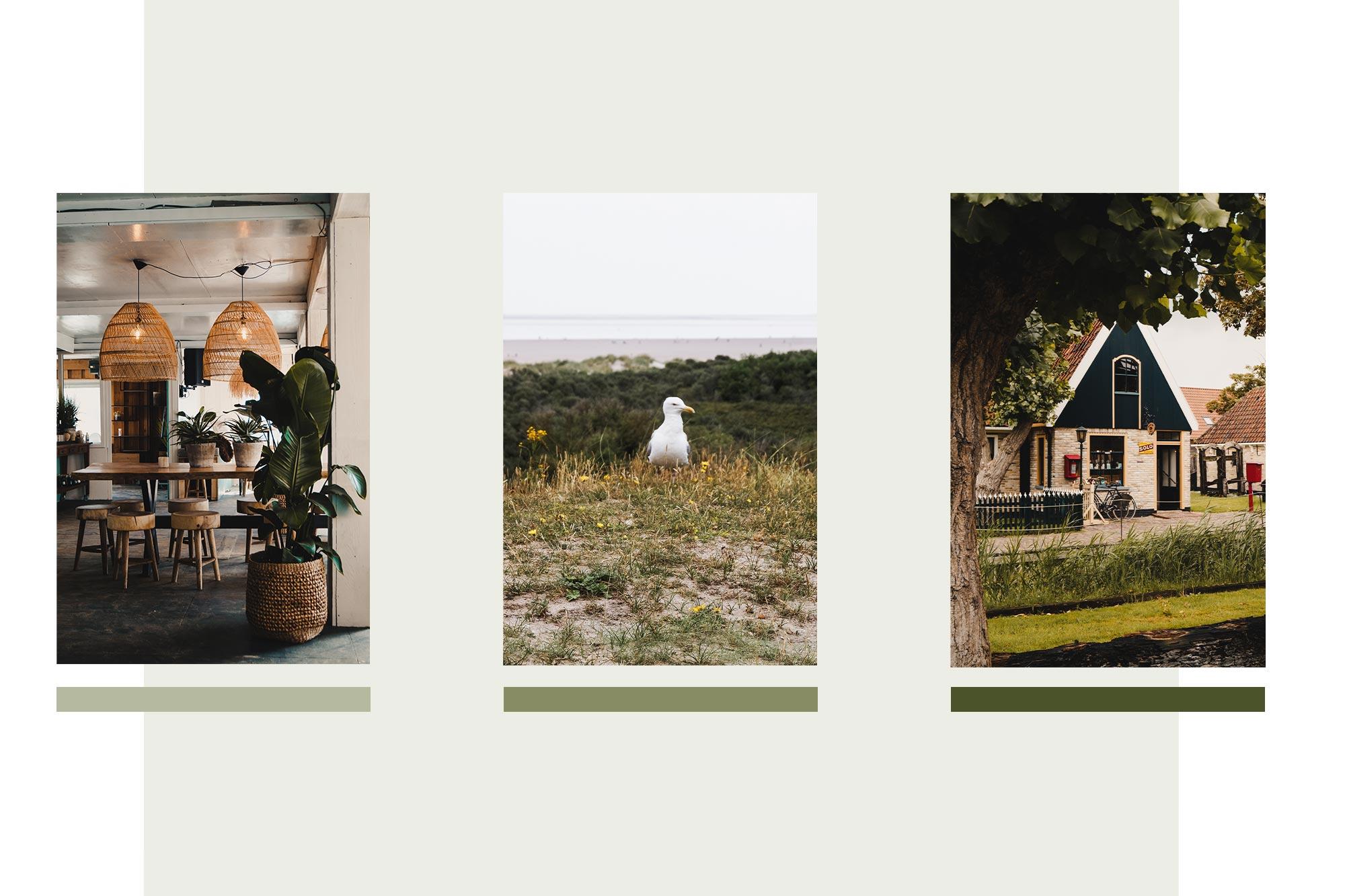 The New Journey - Texel