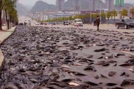 আমেরিকায় মাছ বৃষ্টি, fish rain, মাছ বৃষ্টি;
