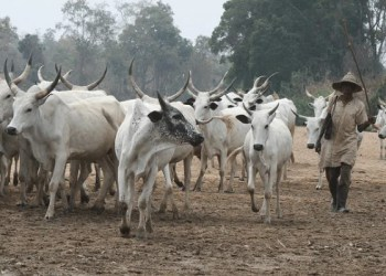 Tensions high as farmers in Affram plains vow to attack herders