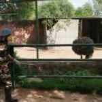 गांधी प्राणी उद्यान को किया पूर्ण रूप से आइसोलेटेड, सभी जानवरों की हो रही है  निगरानी