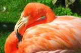 Flamingo Escaped Kansas Zoo in 2005 Is Spotted in Texas