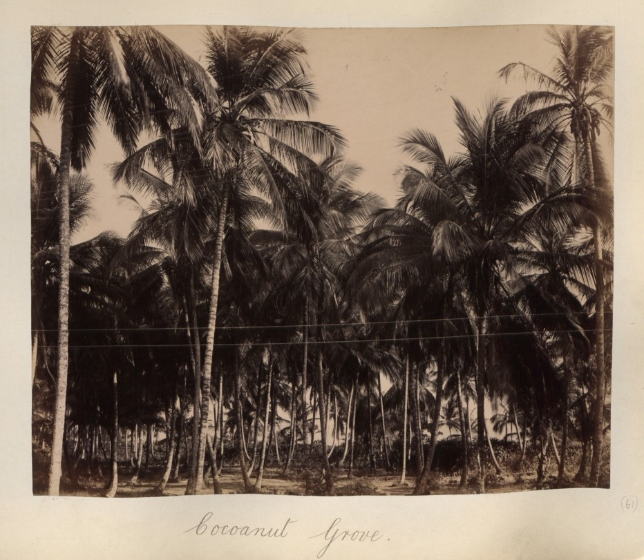 Coconut Grove Courtesy of The National Archives UK