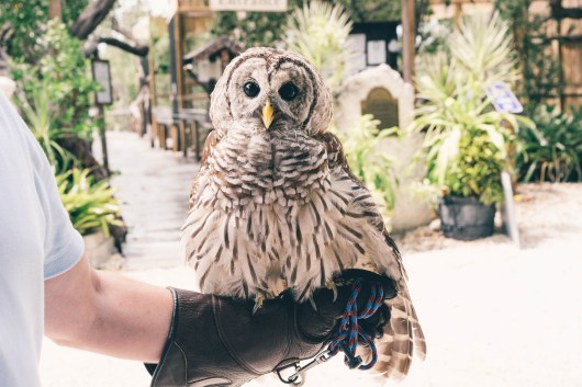 Hanging out with owls at the Florida Keys Wild Bird Rehabilitation Center.