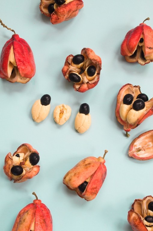 While delicious when properly cooked and ripened, ackee is poisonous when it's unripe.