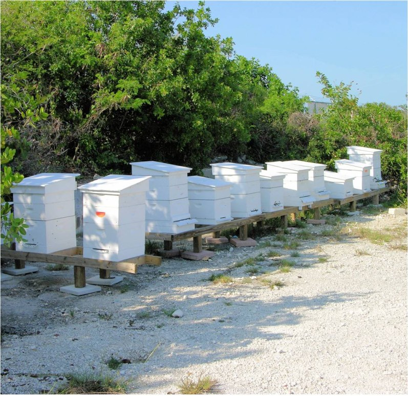 Florida Keys hives managed by Keez Beez (Courtesy of Keez Beez)