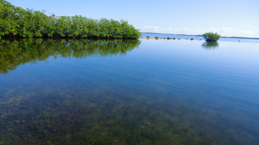 John Pennekamp Coral Reef State Park in Key Largo. (Courtesy of Reinhard Link/Flickr Creative Commons)