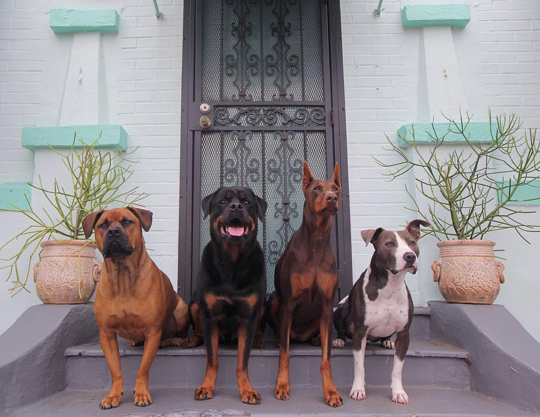 A few of the dogs lined up. (Courtesy of Barkhaus)