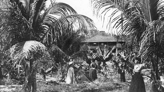Coconut Grove women in front of the Barnacle, the house of Ralph Munroe. Ann Beasley lived in the vicinity of this house. (Courtesy of HistoryMiami Museum)