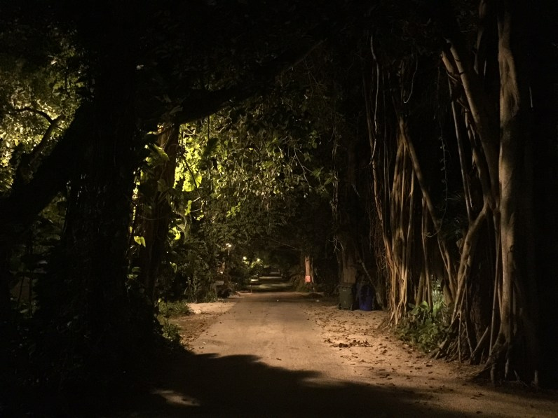 Tree-lined pathway in Coconut Grove (Photo courtesy of Luke Fronefield)