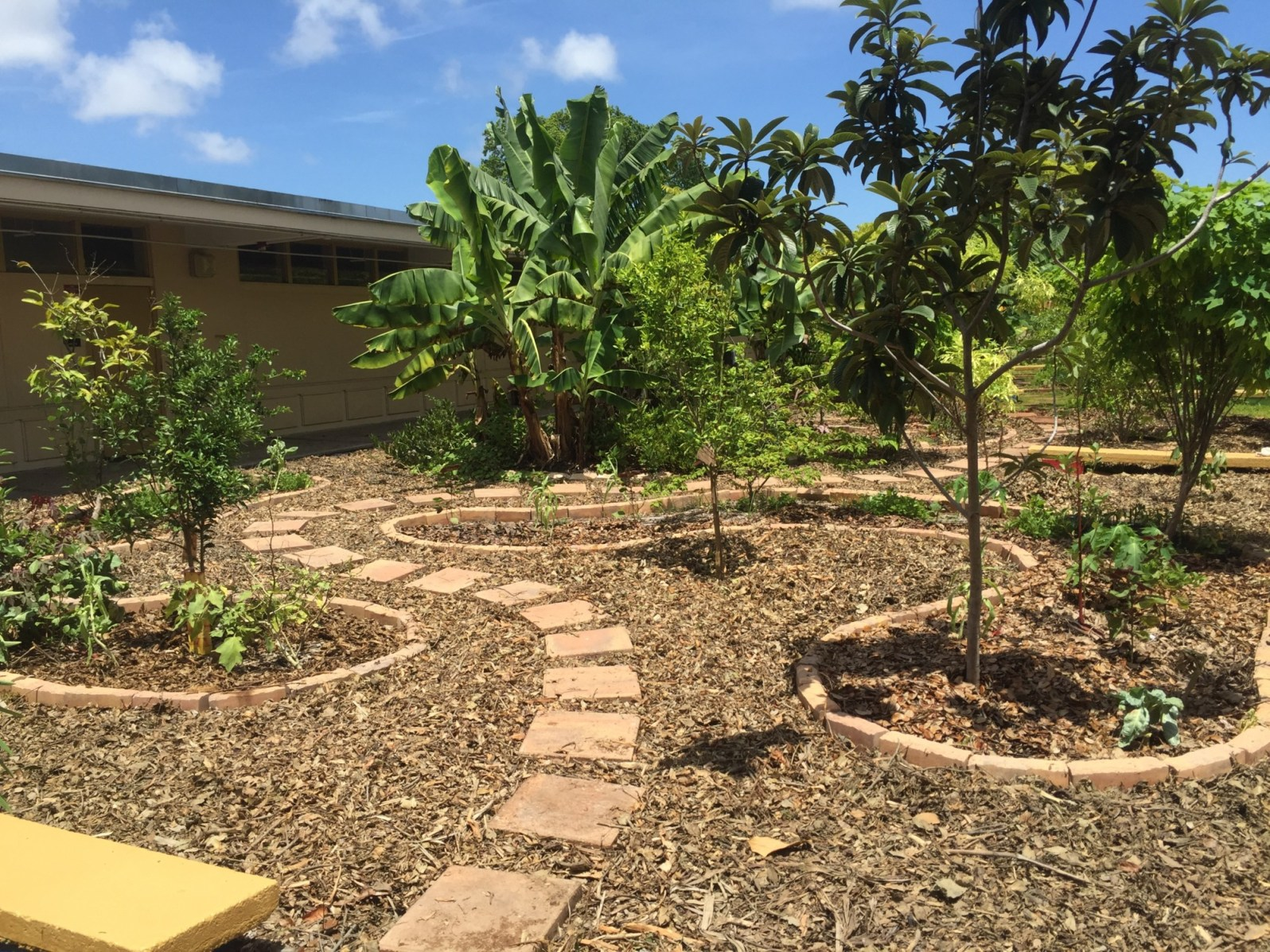 An Education Fund food forest at a local Miami school