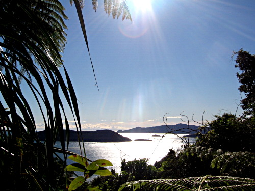 Flora, sea and islands over Queen Charlotte Sound