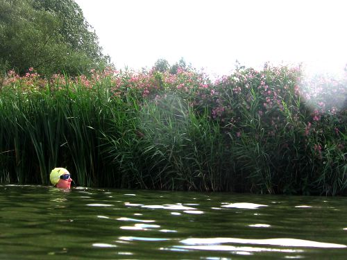 Sedentary swimming