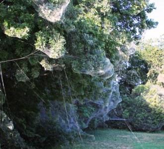 spider-web-dallas