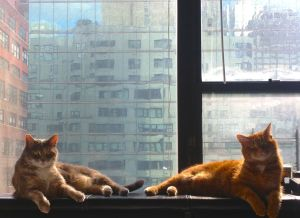 The Diplocats, Boj and Gus. They are city cats; They are pretty cats.