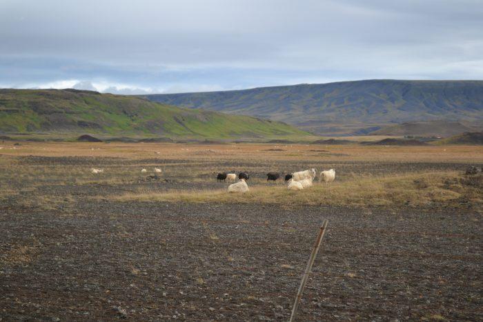 excursión a Landmannalaugar en 4x4