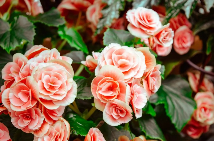 Rose Water Benefits For Skin And How To Use It