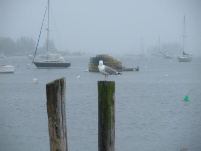 Maine was rainy.  This was a bird.