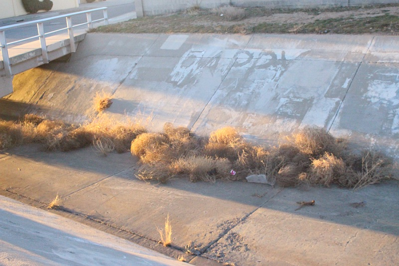 Tumbleweeds gathered in an arroyo near Albuquerque's Stardust Skies Park.