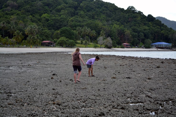 Clam hunting for dinner - Wild Pasir Panjang beach