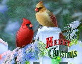 merry christmas (6)
