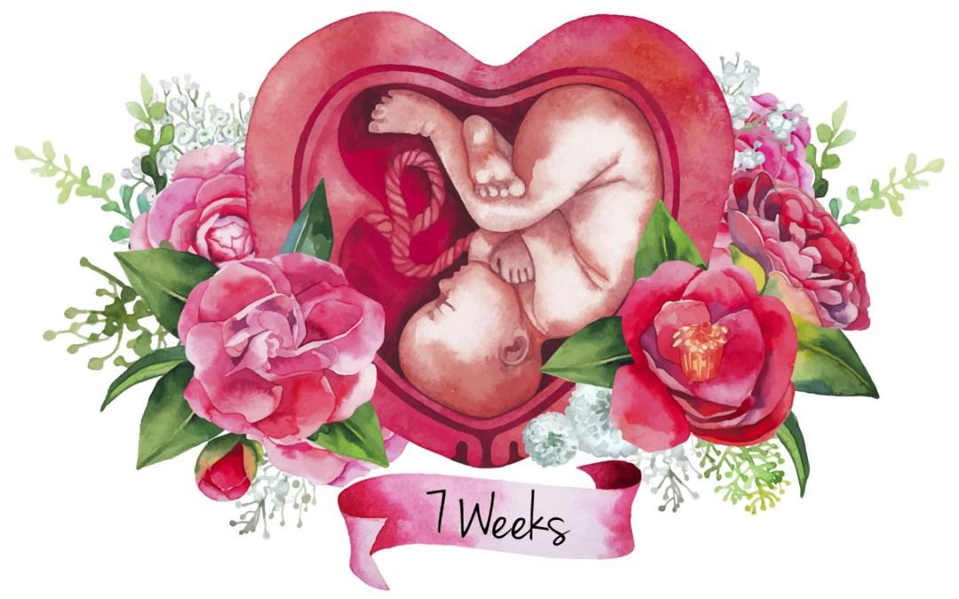 Episode #023: Pregnancy Series: Week 7
