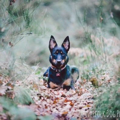 The-Norfolk-Dog-Photographer-0010