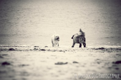 The-Norfolk-Dog-Photographer-0009