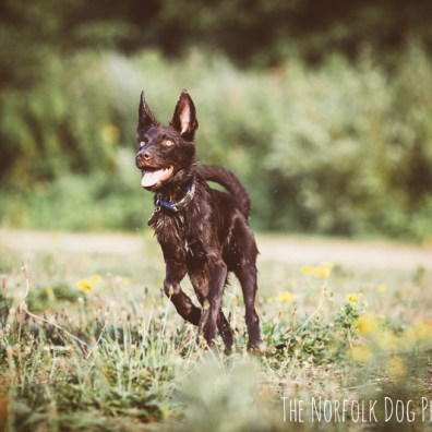 The-Norfolk-Dog-Photographer-0015