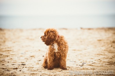 The-Norfolk-Dog-Photographer-0017