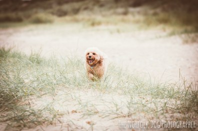 The-Norfolk-Dog-Photographer-0024