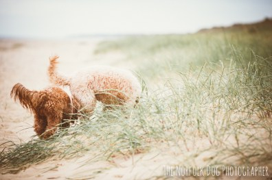 The-Norfolk-Dog-Photographer-0028