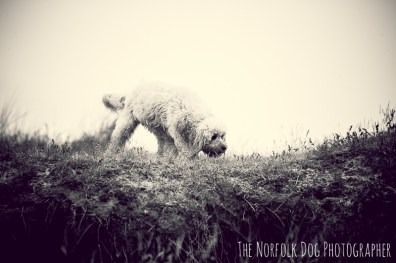 The-Norfolk-Dog-Photographer-0035