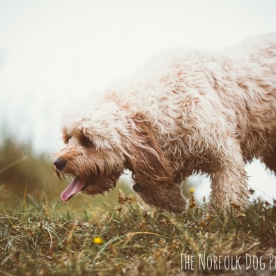 The-Norfolk-Dog-Photographer-0037