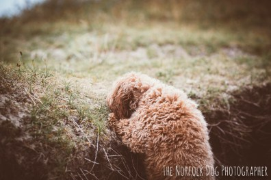 The-Norfolk-Dog-Photographer-0038