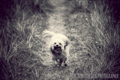 The-Norfolk-Dog-Photographer-0053