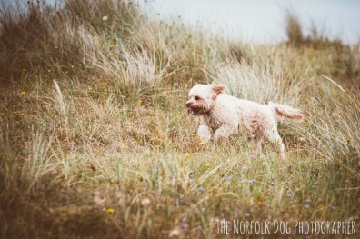 The-Norfolk-Dog-Photographer-0059
