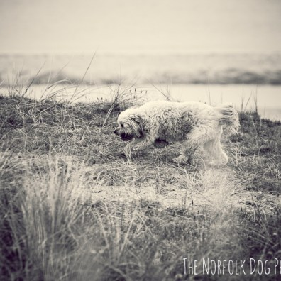 The-Norfolk-Dog-Photographer-0060