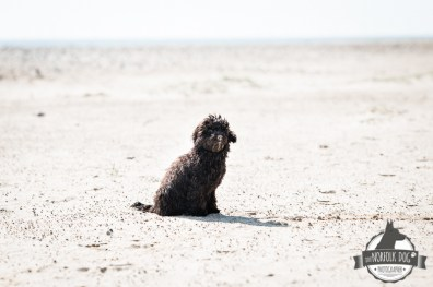 The-Norfolk-Dog-Photographer-0008