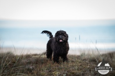 The-Norfolk-Dog-Photographer-0021