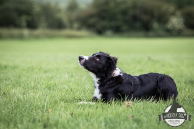 The-Norfolk-Dog-Photographer-0013