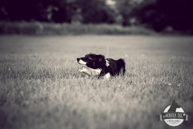The-Norfolk-Dog-Photographer-0016