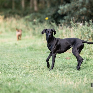 The-Norfolk-Dog-Photographer-0081